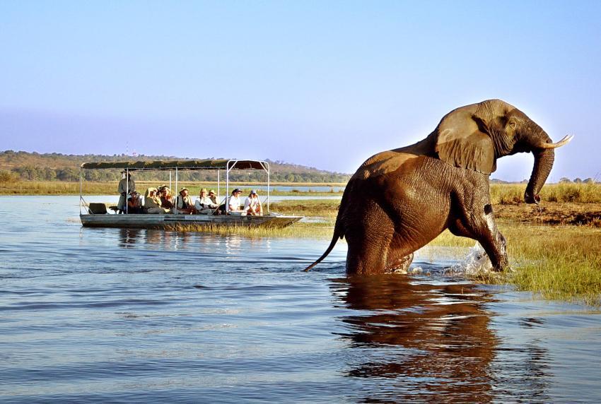 Optional Excursion: Safari in Chobe, Botswana